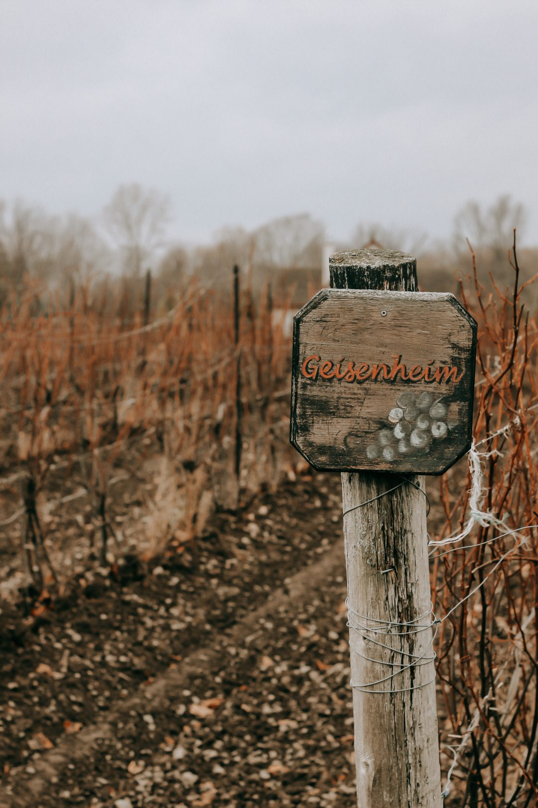 Sandbanks Winery - Vineyard